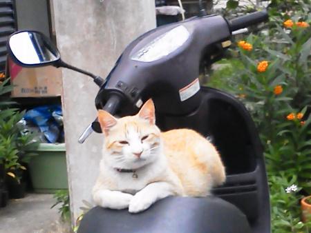 cat riding bike